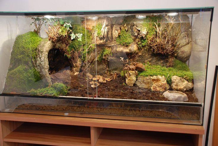 Gecko Home Reptile Ideas Blue Tongue Skink Repti