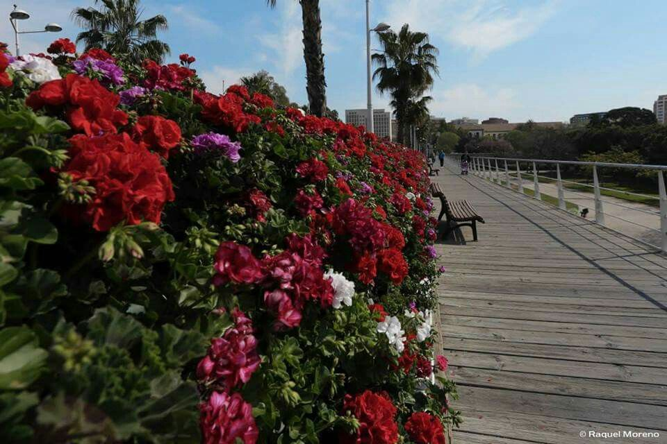Puente de las flores