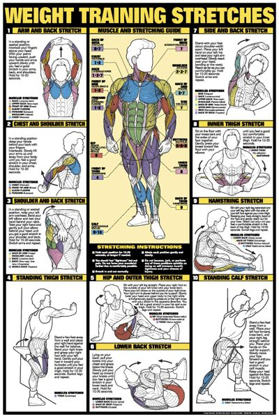Weight Training Stretches Professional Fitness Wall Chart Poster