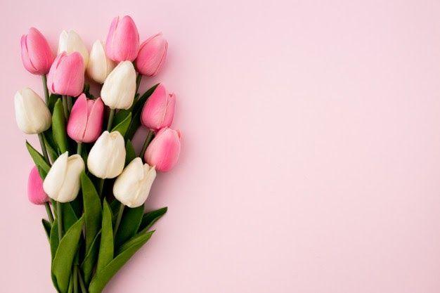 Background Bunga Tulip Foto Bunga Tulip Gambar Bunga Tulip Macam Macam Bunga Tulip Tulip Kuning Tu Pink Background Flower Background Wallpaper Tulip Bouquet