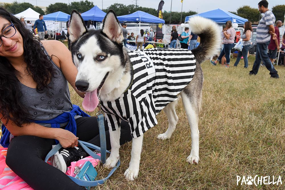 Pin by San Antonio Humane Society on Pawchella 2016 Dogs
