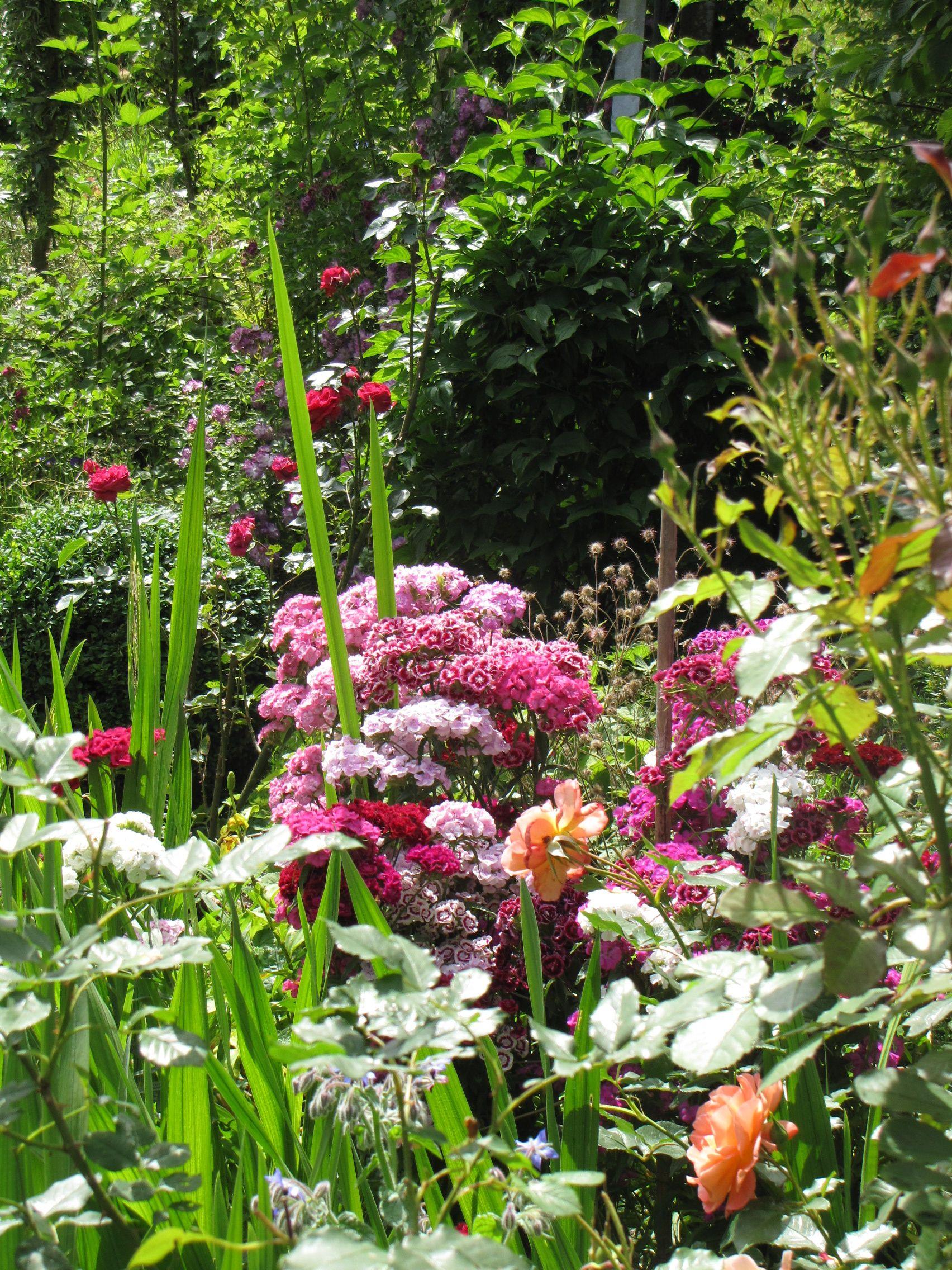Paradiesgarten Maag Im Allgau Design Garten Von Sibylle K Maag Www Paradiesgarten Eu Garten Allgau Paradiesgarten Garten Staudengarten Paradies