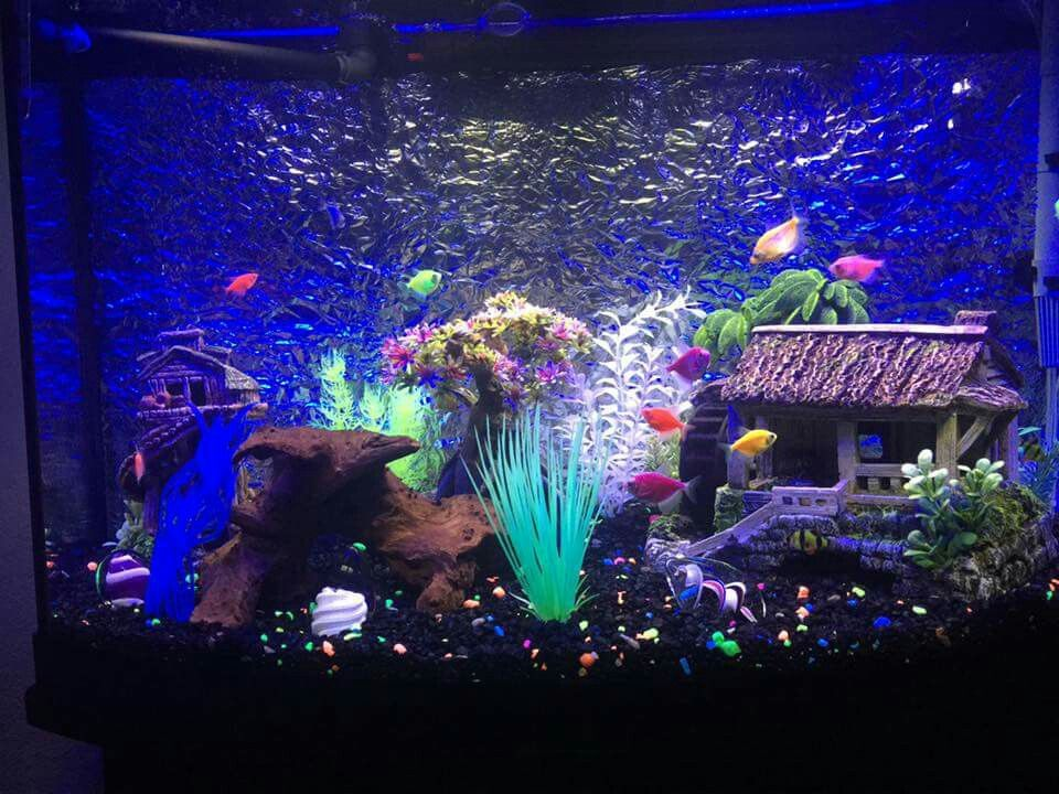 A group members beautiful glofish tank (group members)