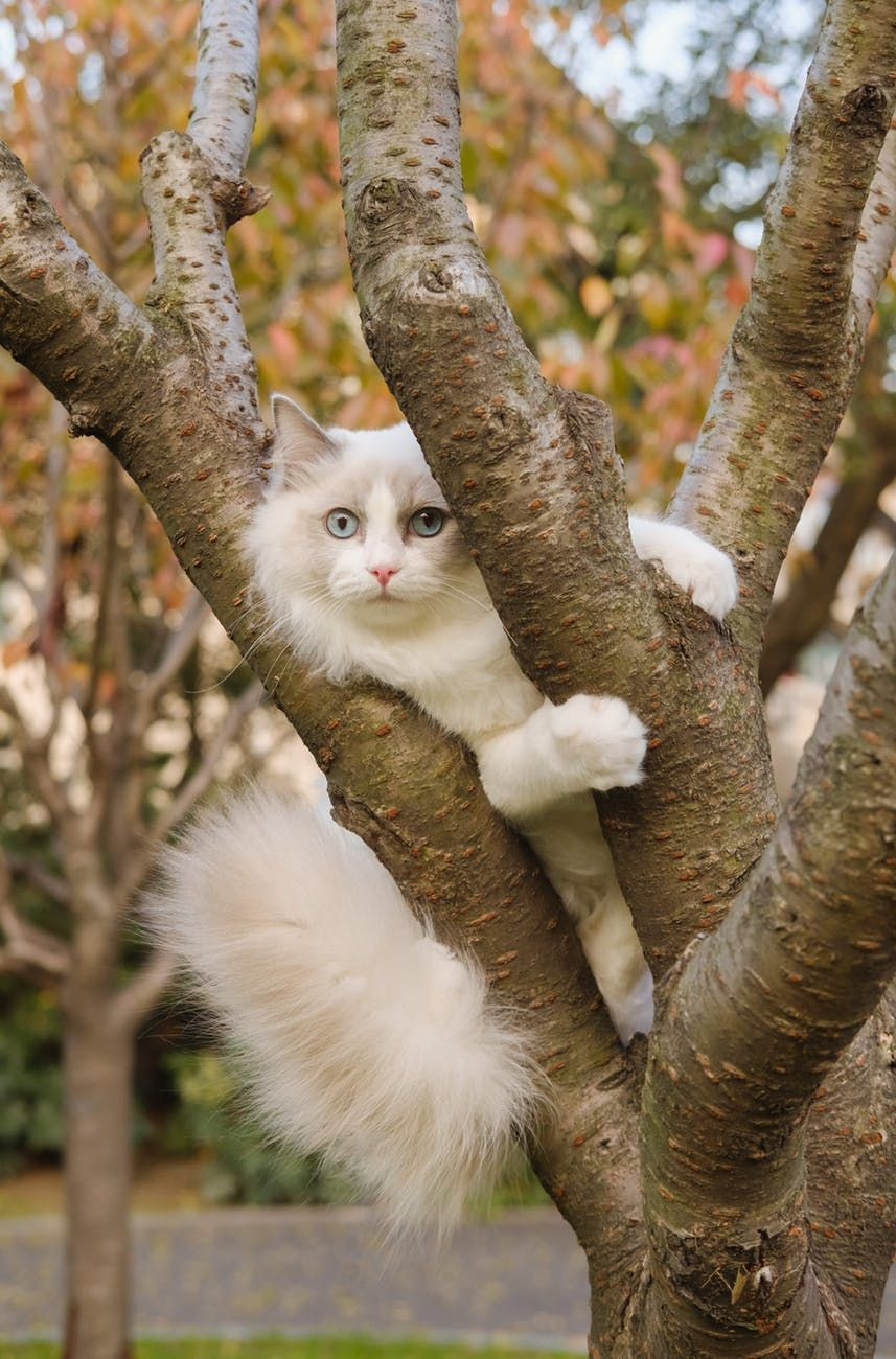 White cat climbing a tree whitecat tree climbing