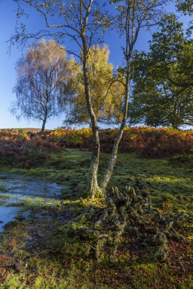 Lyndhurst New Forest Neville Stanikk Photography New Forest Landscape Photos Landscape Pictures