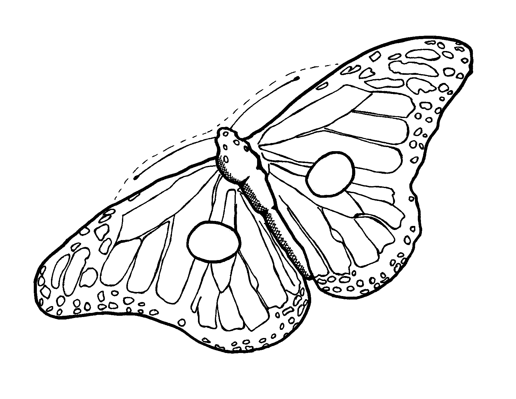 Moth Clipart Butterfly Outline 12