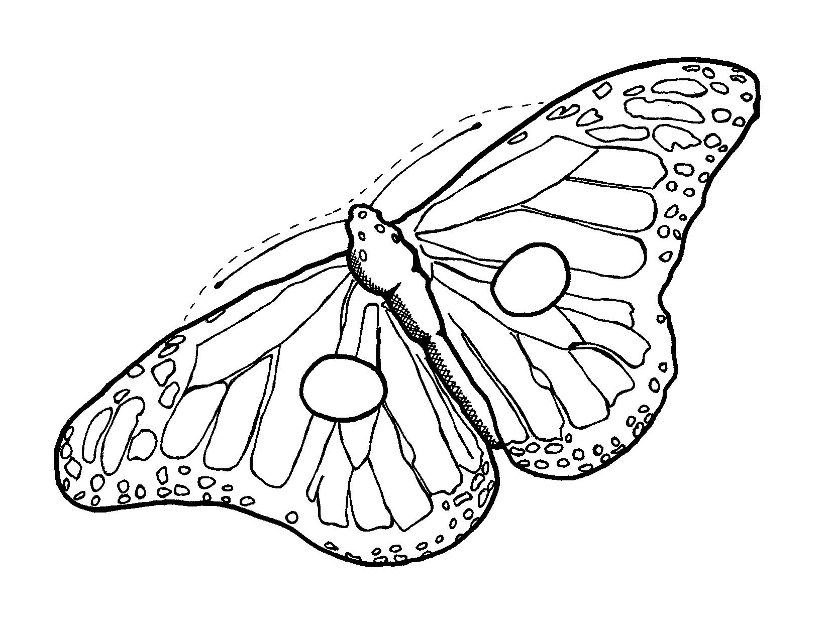 Αποτέλεσμα εικόνας για butterfly mask | ΕΝΤΟΜΑ | Pinterest | Mask ...