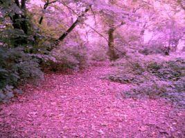 + Forest + by TigerDRena