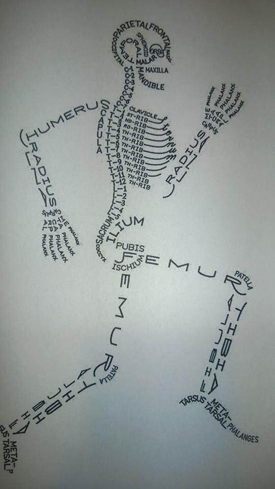 Pin de Rosa Ma. en CIENCIAS | Pinterest | Anatomía, Medicina y El hueso