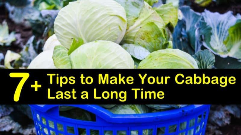 how to freeze cabbage for coleslaw