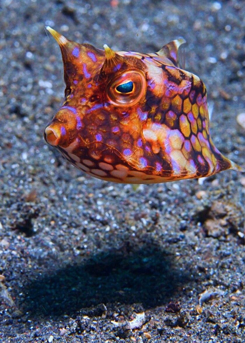 boxfish weird science fish marine fish saltwater tank