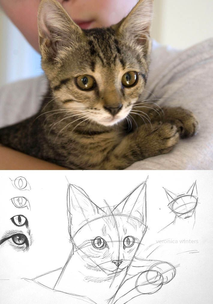 How To Draw Cat Eyes That Look Real Drawing Pinterest Drawings