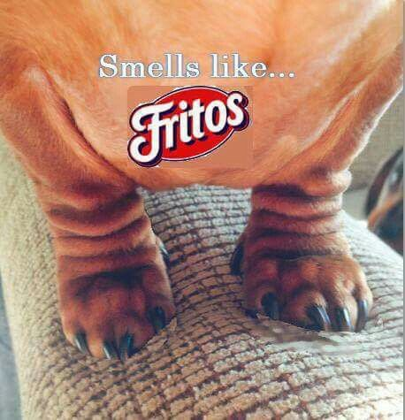 So Much Like Fritos Simply One More Reason To Love Em