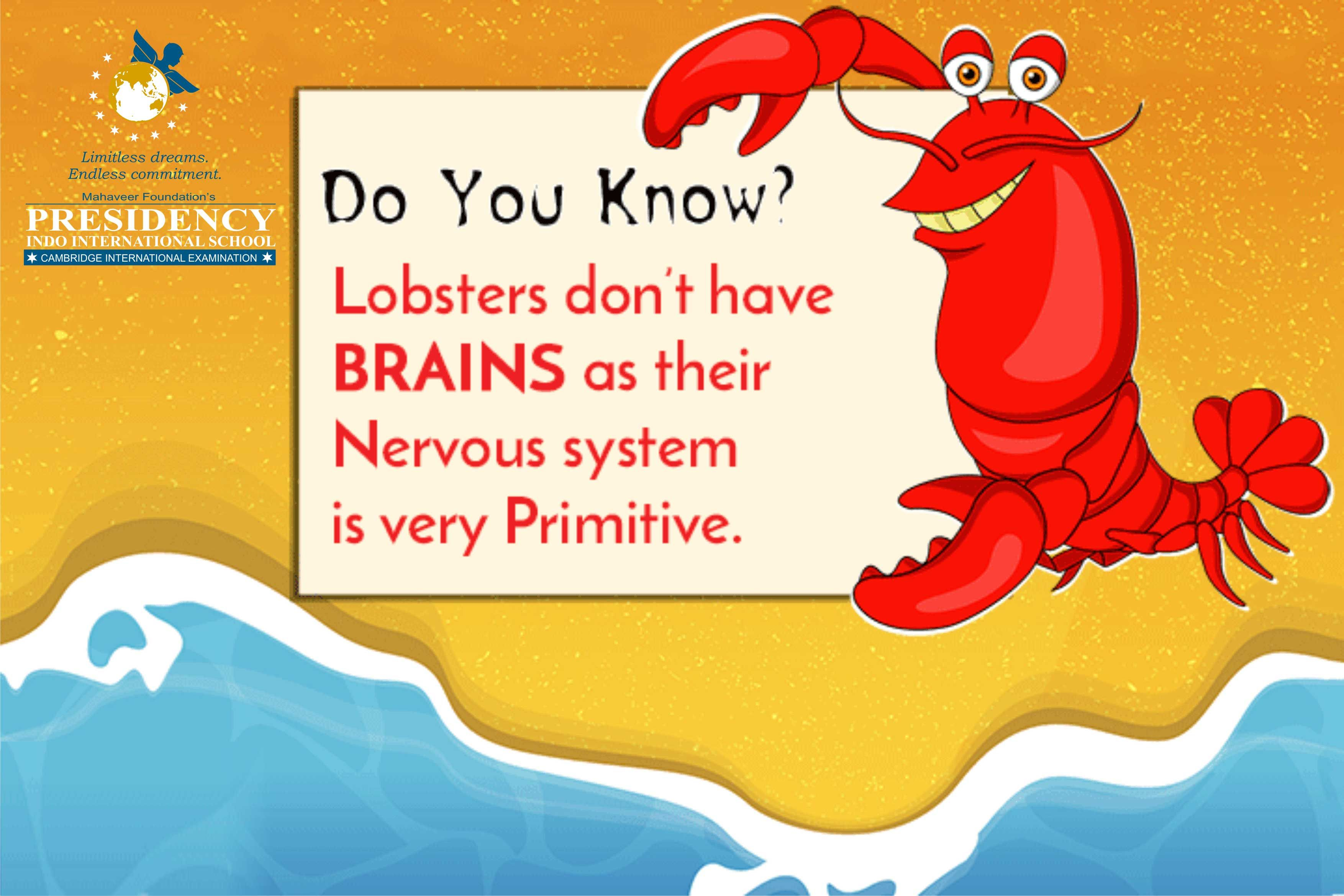 Do You Know Lobster S Don T Have Brains As Their
