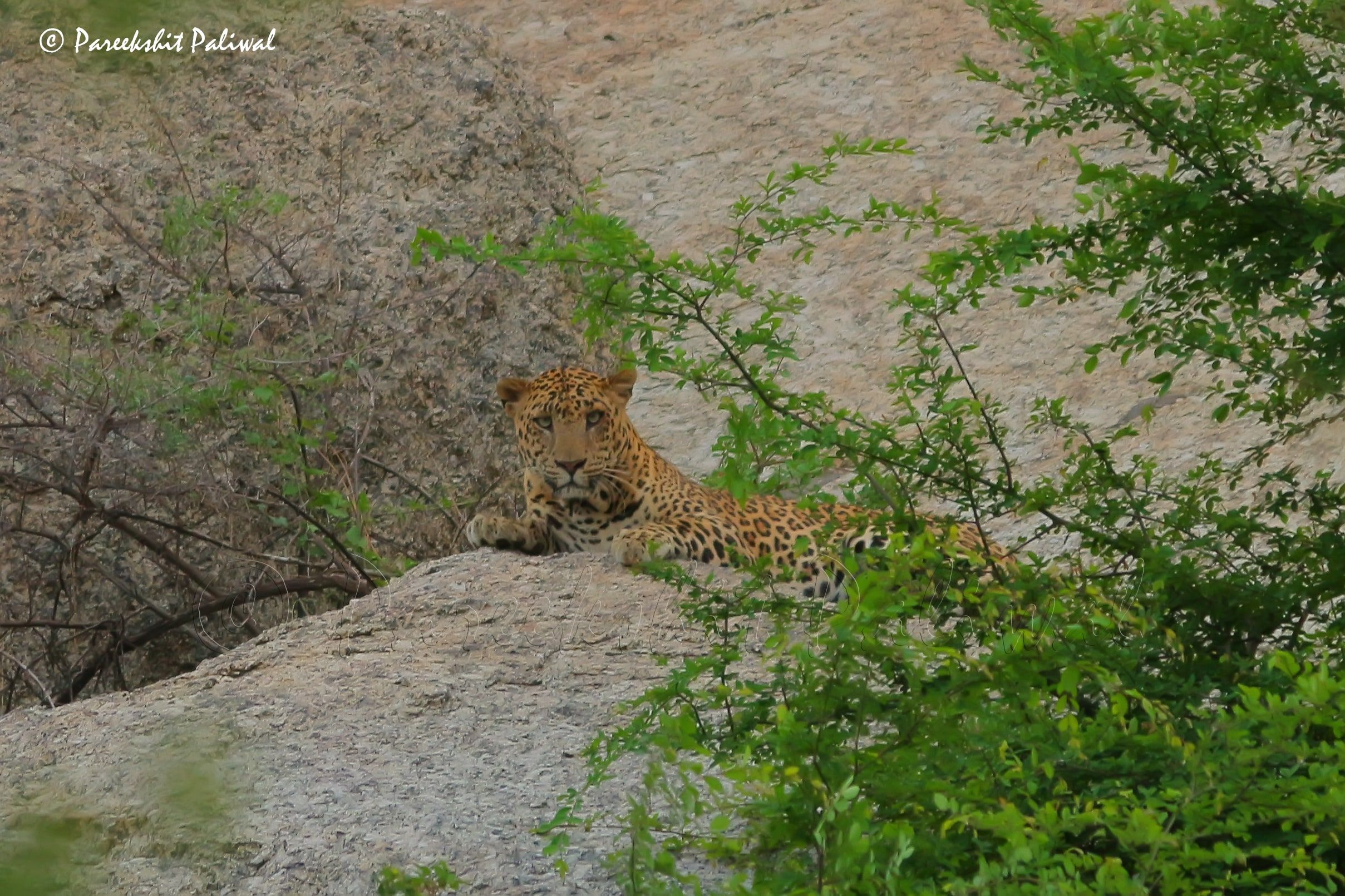 Jawai is an untouched land where you can capture the