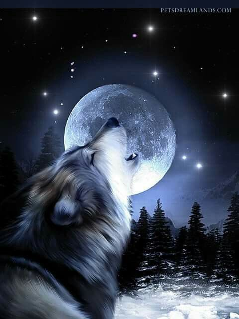 Wolf Howling At The Moon In The Moonlight