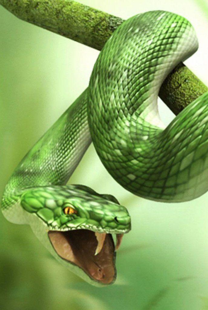 3D Green Snake Wallpaper IPhone