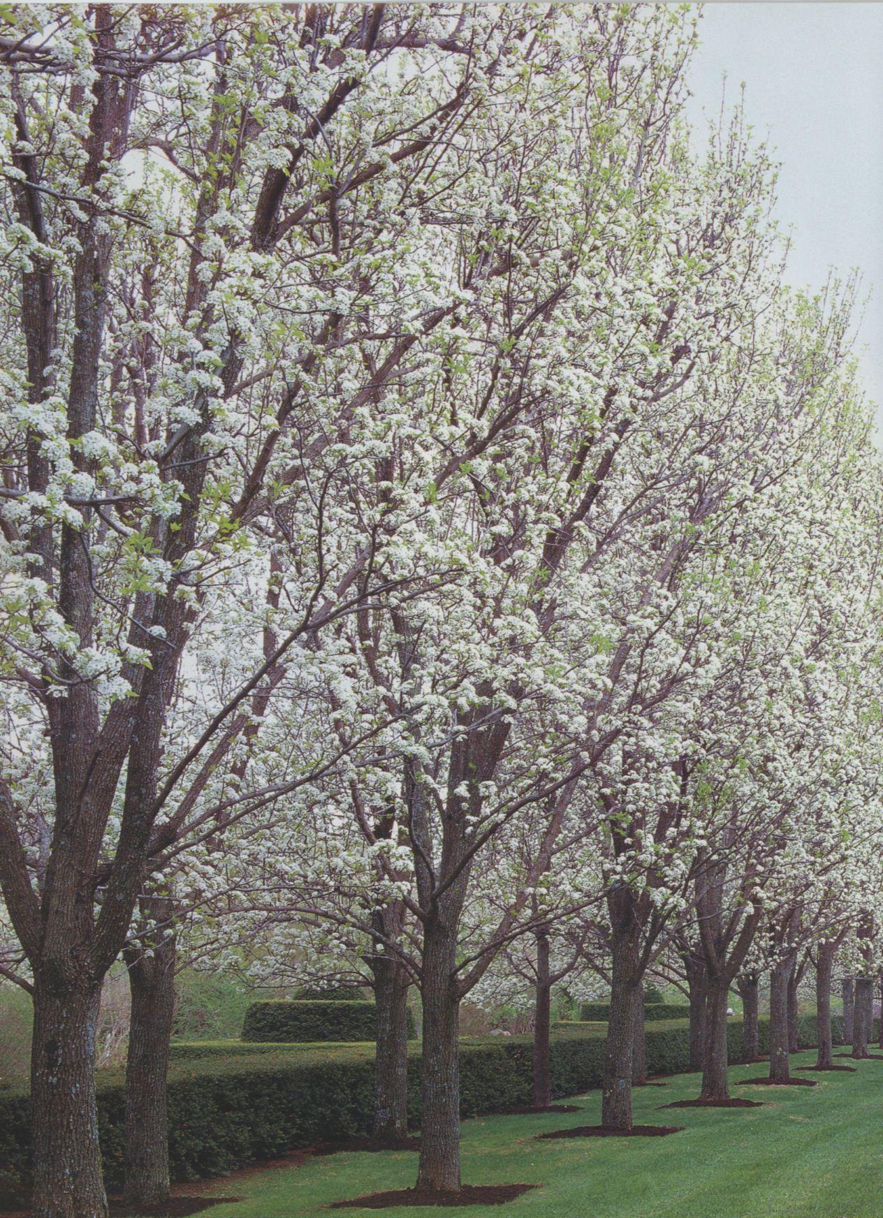 Pin by Lohman on Gardens, Landscape Landscape