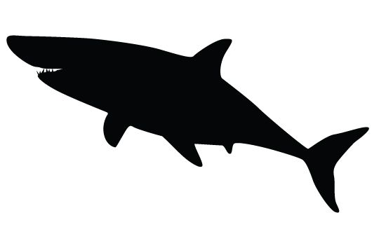 shark silhouette vectors vector free download shark and silhouettes rh pinterest com shark victory press blue/grey watch shark victory press blue/grey watch