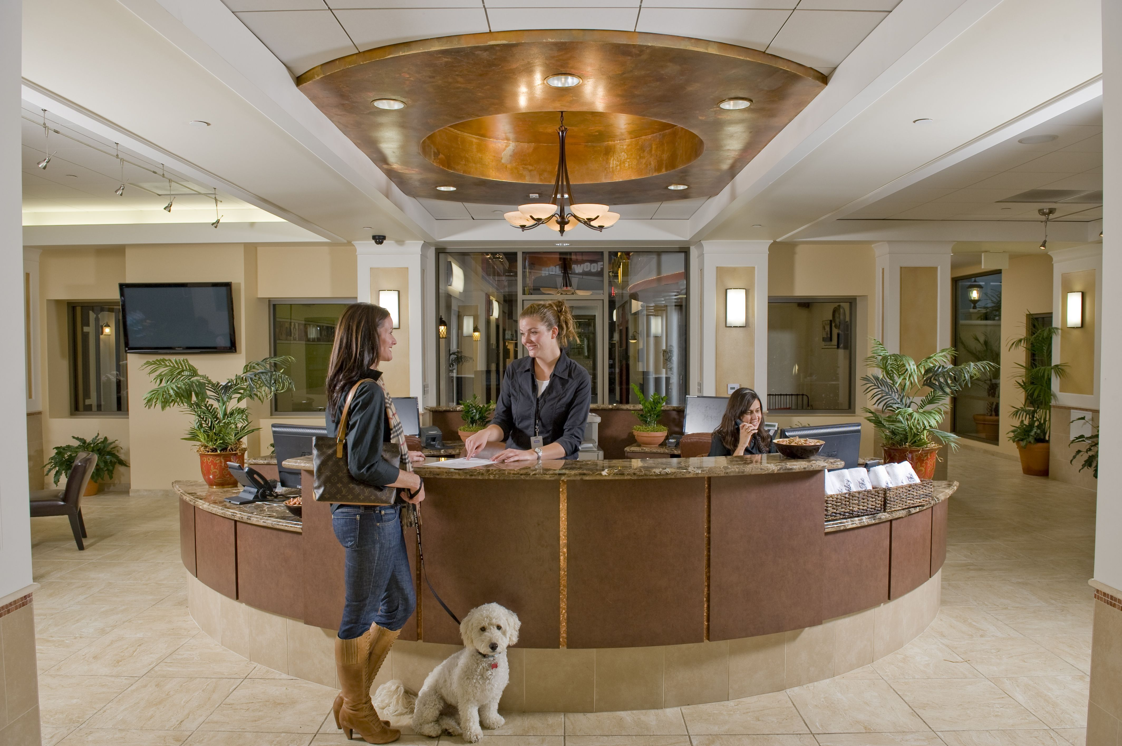 Front Desk Of The Barkley Pet Hotel Looks Like It S For Humans