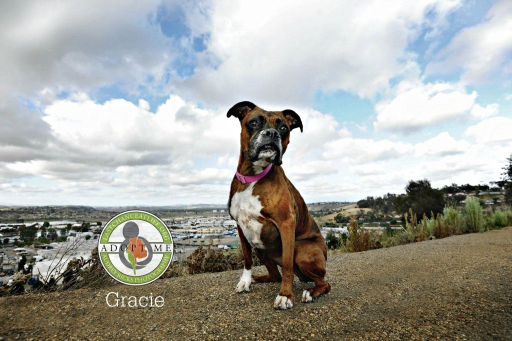 Lastchanceatlife Gracie D3x 2121 Logo Dog Adoption