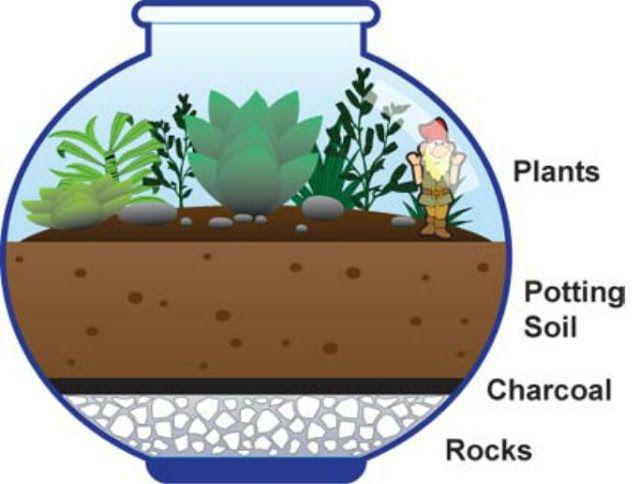 Hümeyra'nın denizi: Terrarium nedir ve nasıl yapılır? #bonsaiplants