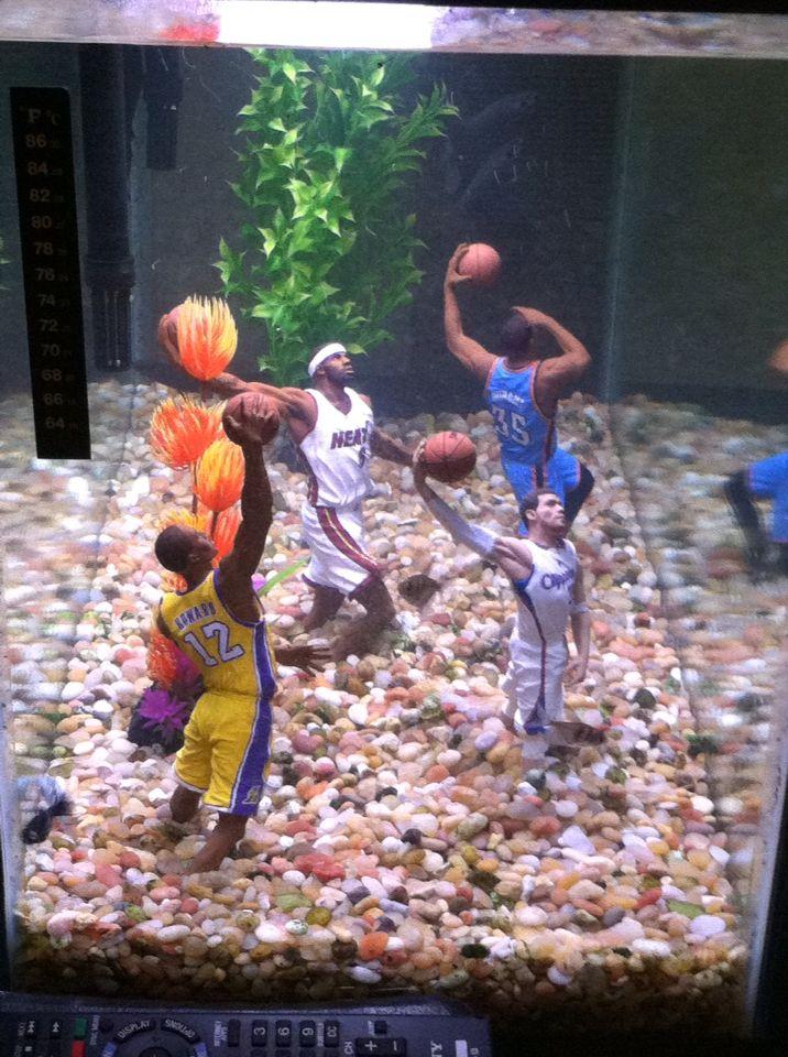 My Husband And Our Boys Give Our Fish Tank An Nba Theme Nba Theme Nba Players Sports Theme