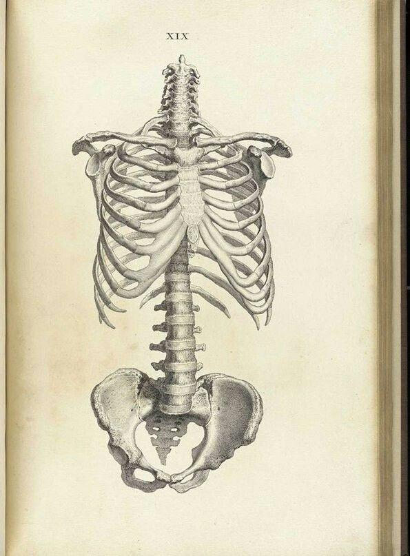 Pin By Carol Anne Carter On Artsy Fartsy Pinterest Anatomy