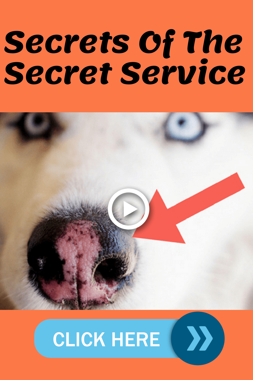 Park Art My WordPress Blog_Cat Has Blood In Stool But Acting Normal