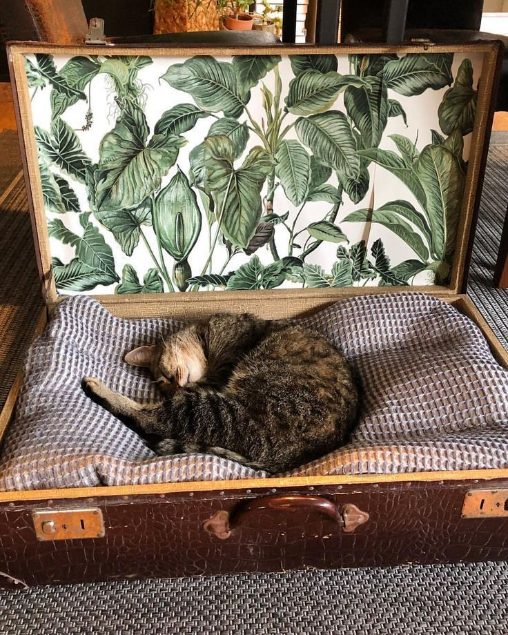 Textures  Patterns  carpet wallpaper old suitcase blanket in pistol  cats  Textures  Patterns  carpet wallpaper old suitcase blanket in pistol  cats