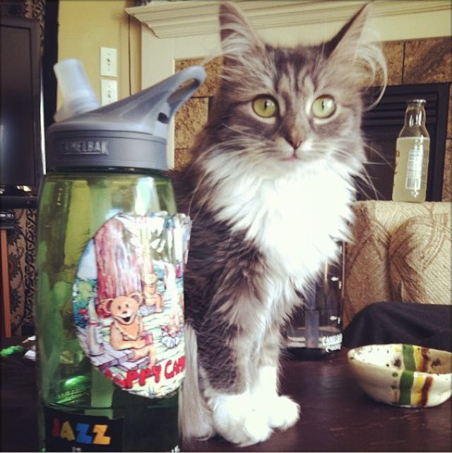 Owsley fluffy cat stopped growing at 6 months old, he's