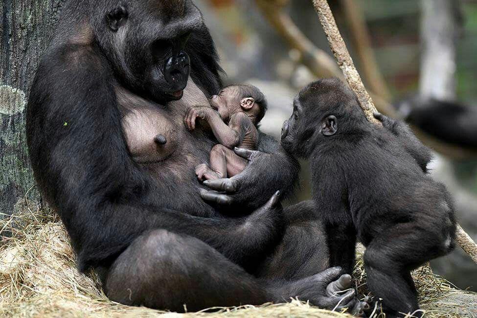 правила картинки обезьяны и детеныша сейчас