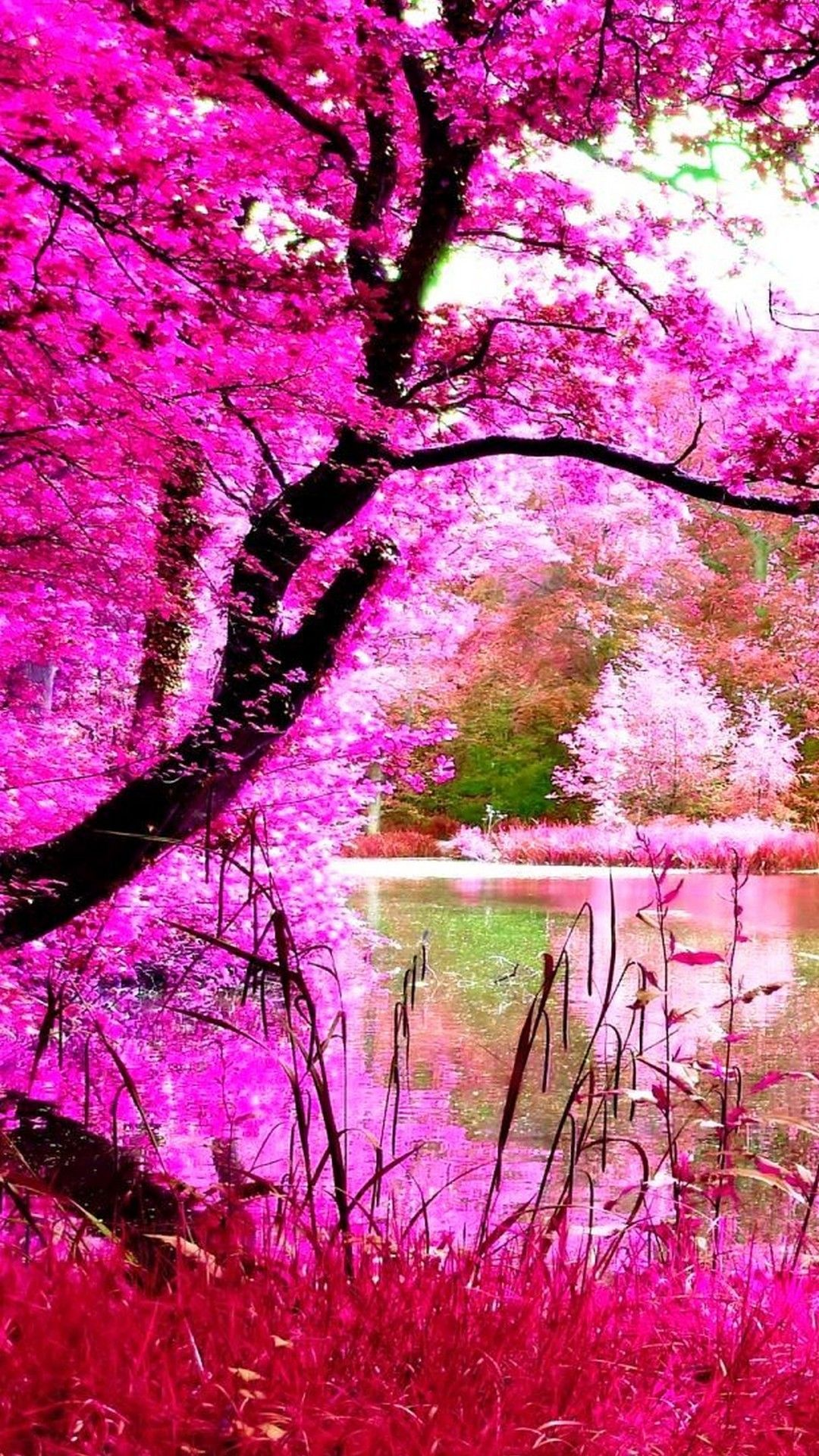 Beautiful Pink Nature Iphone Wallpaper Nature Iphone