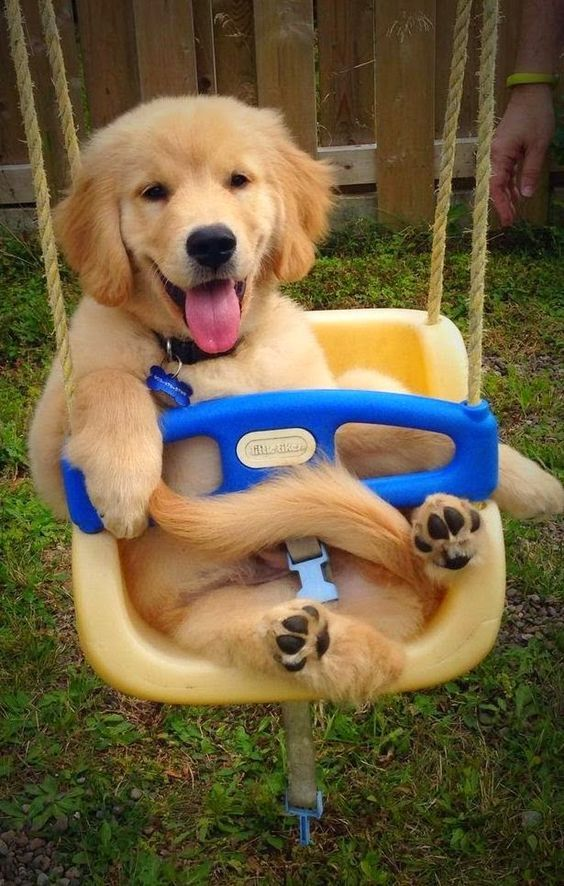 Some Useful Information About First Dog Care Avec Images Chiot