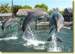 Home Theater Of The Sea Dolphins Places In Florida Florida Keys