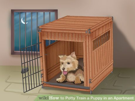 How To Potty Train A Puppy In An Apartment House Training Dogs Puppy Training House Training Puppies