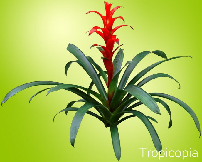 How To Care For Bromeliads Houseplant 411 How To Identify And Care For Houseplants Bromeliads Plants House Plants
