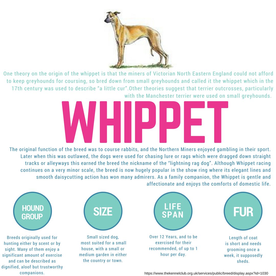 This Weeks Wednesdaywisdom Breed Information Is On The Honest