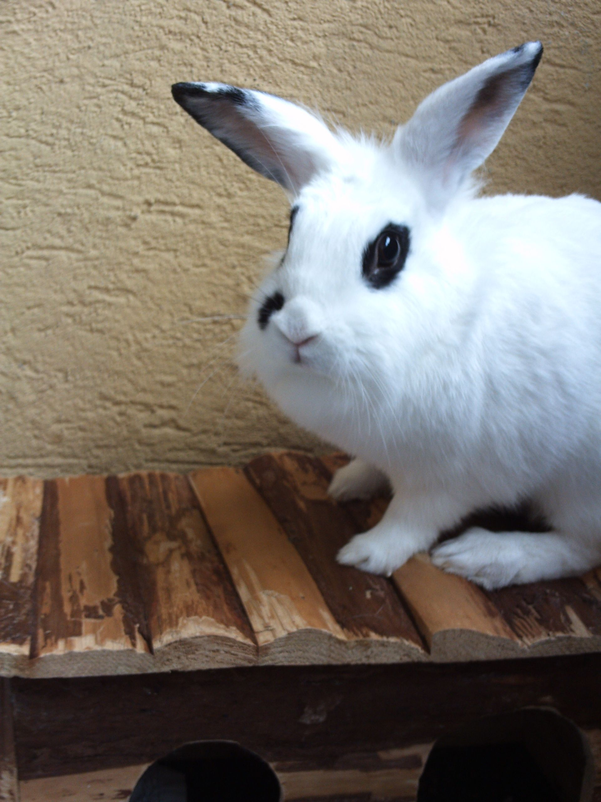 Flecki Kaninchen Pawshake Berlin Kaninchen, Süßeste
