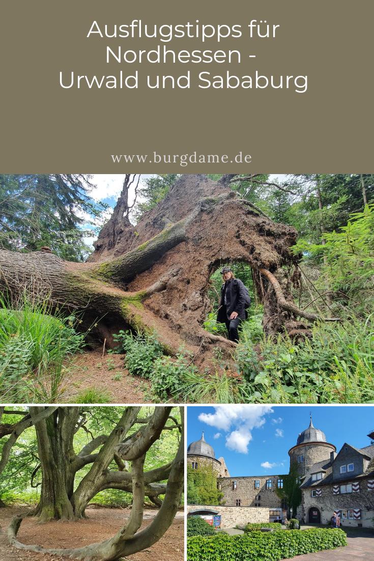 ausflugstipps für nordhessen  urwald und sababurg