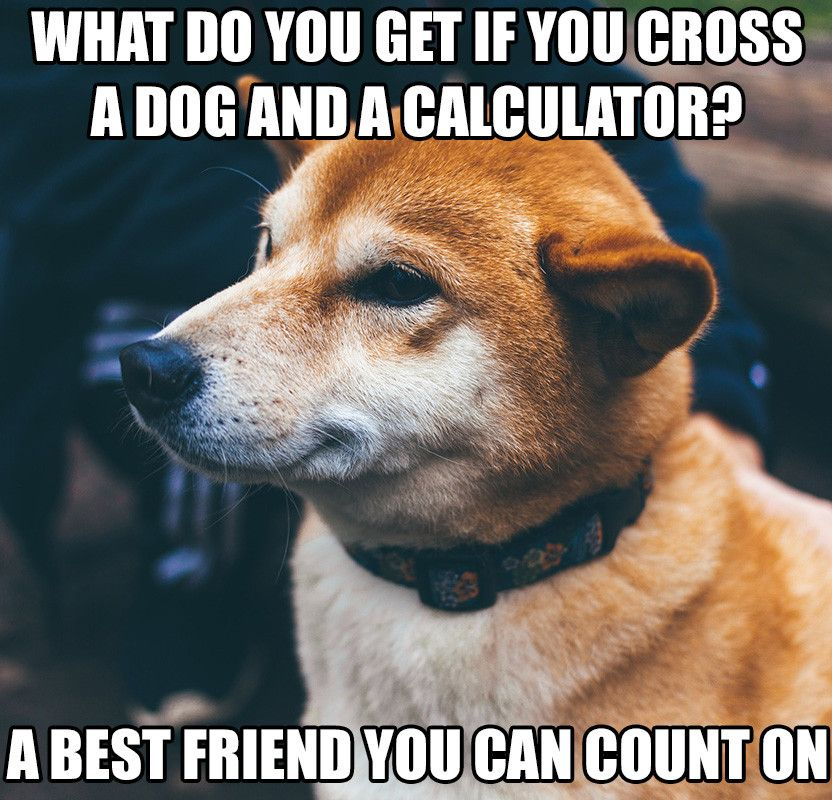 How can aloe vera benefit you? Dog training near me, Dog