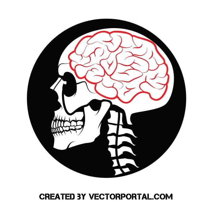Skull with a brain vector image skull vectors pinterest brain and human skull