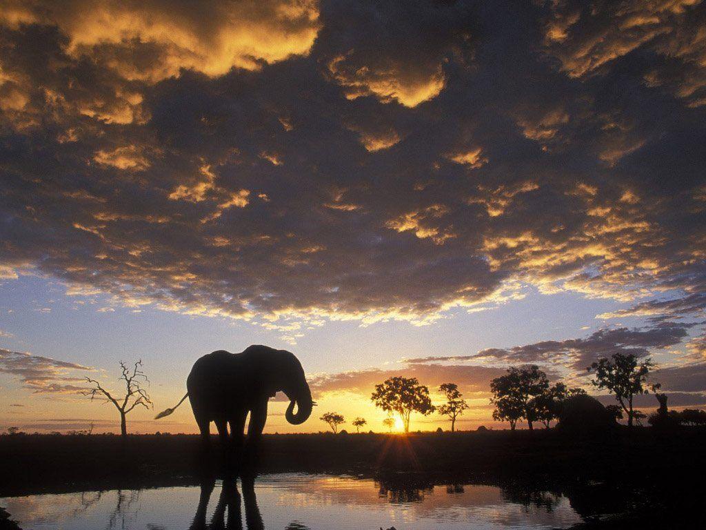 Hd wallpaper elephant - Elephant Hd Wallpapers Backgrounds Wallpaper