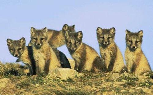 Eläimet kokoontuvat suuriin ryhmiin