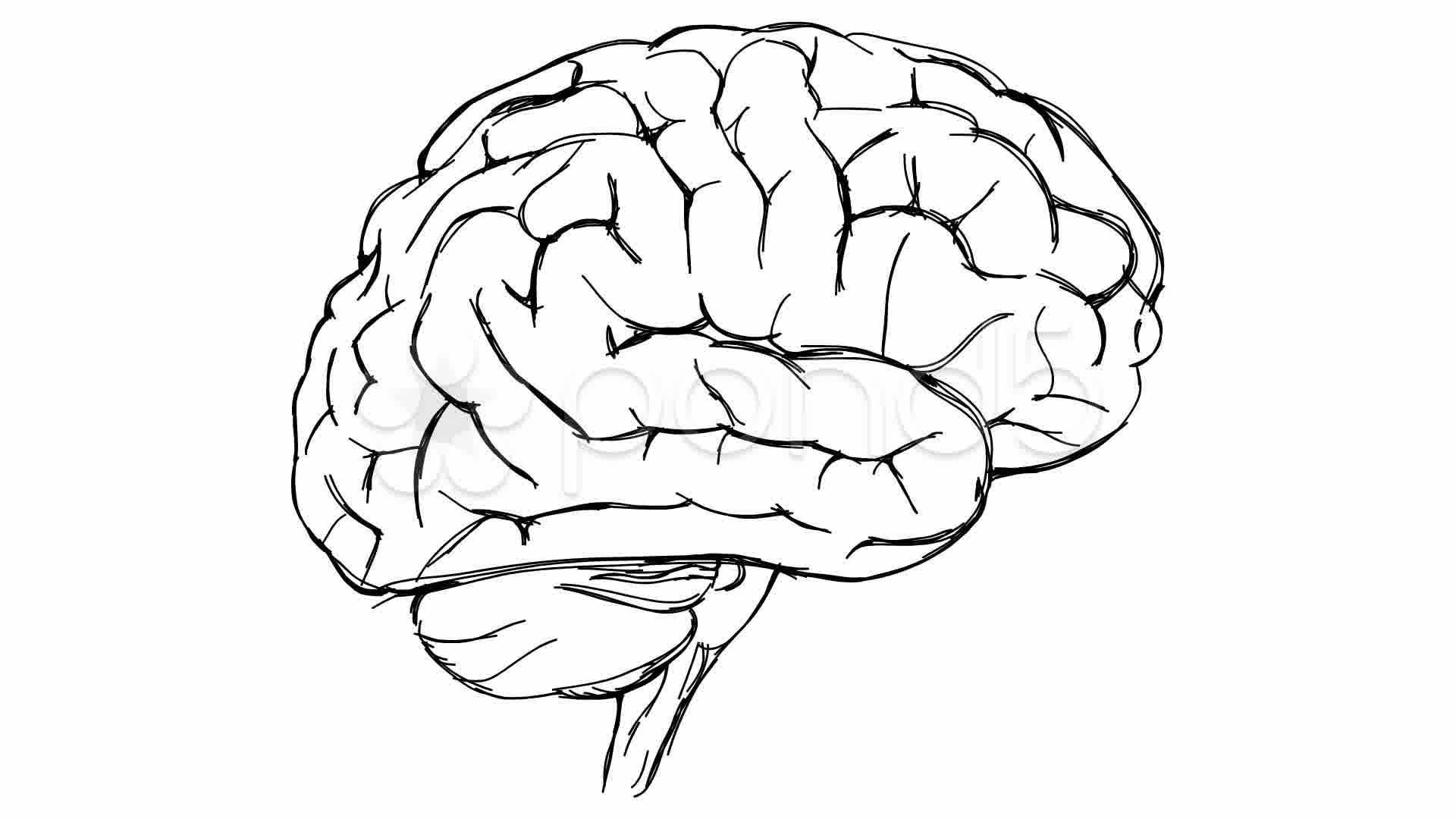 human brain sketch - Google Search | Brain drawing, Brain ...