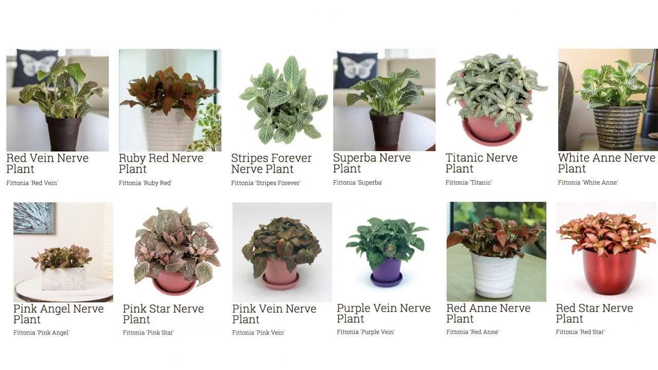 Common Houseplant Identification Plants House Plants Plant Identification