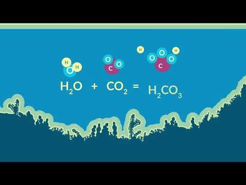 2266 La Acidificación De Los Océanos Youtube Acidificación Del Océano Cambio Climatico Climatico
