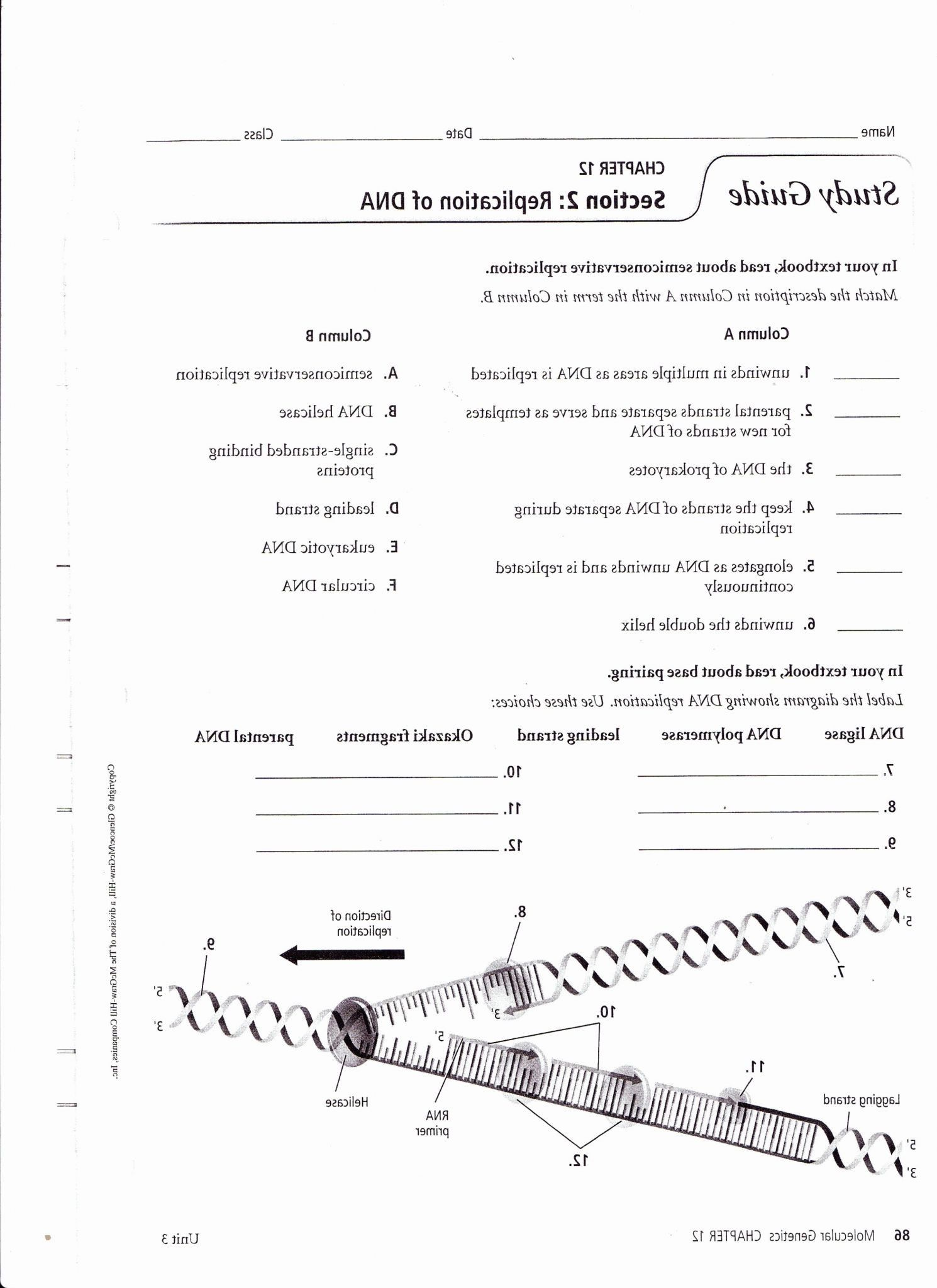Officialofficial Dna Structure And Replication Worksheet