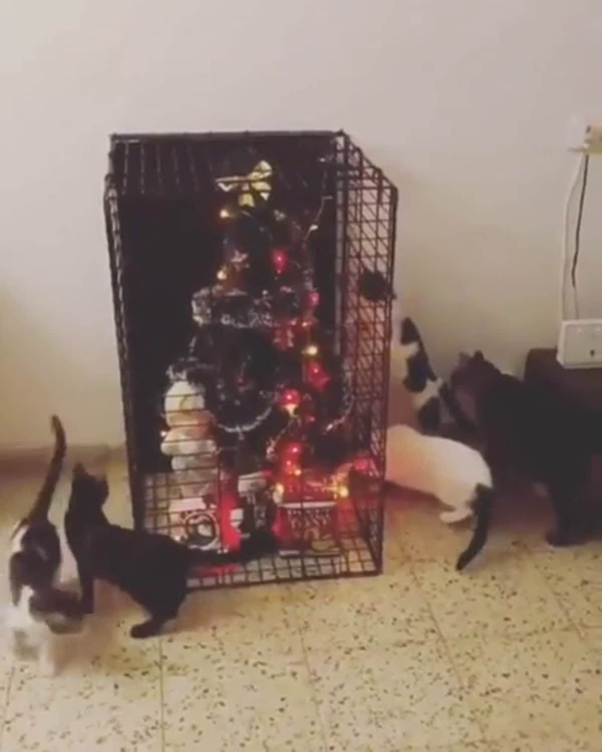 Keep Cat Away From Christmas Tree: The Only Way To Keep A Christmas Tree When You Have Cats