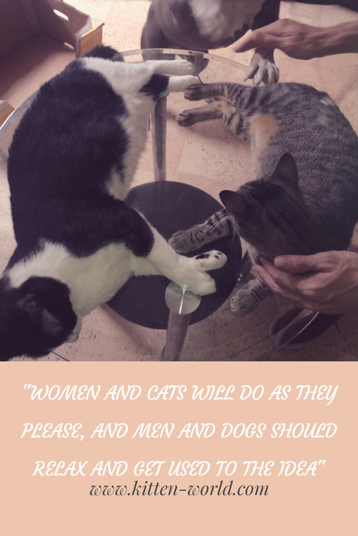 Women And Cats Will Do As They Please And Men And Dogs Should Relax And Get Used To The Idea Cat Lover Quote Cat Quotes Man And Dog